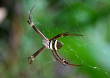 Free St Andrew S Cross Spider Stock Image - 774971