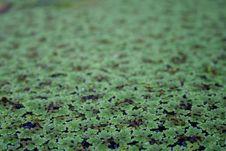 Free Pond Stock Photos - 774983