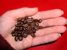 Free Coffee In The Hand Stock Images - 775524