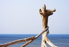Free Driftwood Stock Photos - 776943
