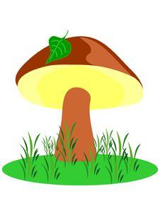 Free Mushroom. Stock Images - 777114