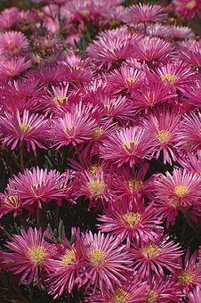 Free FlowersVertical Stock Photography - 777292