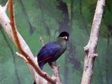 Free Bird Royalty Free Stock Image - 778796