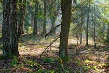 Free Spring Wood. Royalty Free Stock Photo - 779425