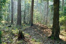 Free Spring Wood. Stock Photography - 779452