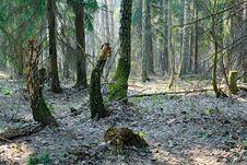 Free Spring Wood. Stock Photo - 779530