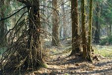 Free Spring Wood. Royalty Free Stock Images - 779579