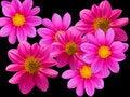 Free Flowers Decorative Stock Photos - 7703113
