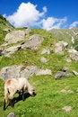 Free Sheep Herd On Mountain Plateau Stock Photos - 7704153