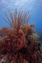 Free Colony Of Soft Corals Royalty Free Stock Images - 7707309