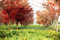 Free Trees Colour Of Fall Stock Photography - 7708892