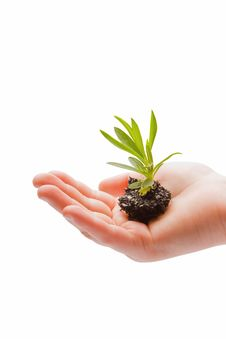 Free Small Plant Nurtured In A Childs Hand Stock Photography - 7700282
