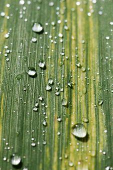 Free Rain Dops On Grass Blade Stock Photos - 7700323
