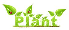 Free Plant Concept Royalty Free Stock Images - 7700439