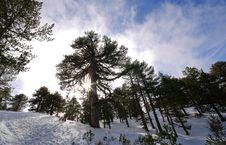 Free Winter Mountain Landscape Stock Photos - 7701093