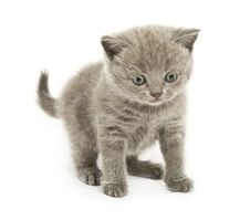 Free Kitten Over White Royalty Free Stock Photos - 7701958