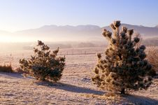 Free Frozen Trees In The Winter Stock Photo - 7702020