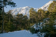 Winter Forest With Mountains Stock Images
