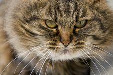 Free Hairy Domestic Cat Stock Photos - 7702723