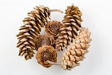 Free Assorted Pine Cones Stock Photos - 7702823