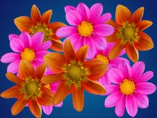 Free Flowers Decorative Royalty Free Stock Images - 7703199