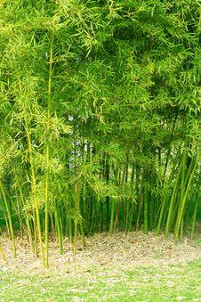 Free Bamboo Stock Photography - 7703402