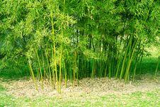 Free Bamboo Royalty Free Stock Image - 7703646