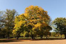 Free Autumn Tree Stock Image - 7704091