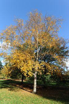 Free Autumn Tree 5 Stock Photo - 7704350