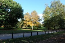 Free Autumn Tree 6 Stock Images - 7704424