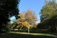 Free Autumn Tree 7 Stock Photo - 7704470