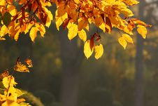 Free Detail Of Leafs Stock Photo - 7705670