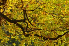 Free Detail Of Leafs Stock Image - 7705671
