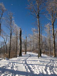 Free Winter Path Stock Image - 7706151