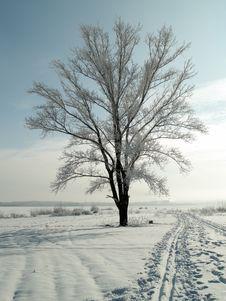 Free Lonely Tree Stock Image - 7706321
