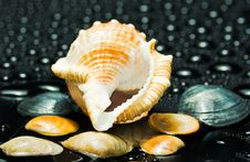 Free Cockleshells Royalty Free Stock Images - 7706449