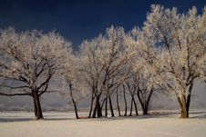 Free Trees And Frost Stock Photography - 7706902