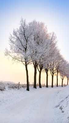 Free Row Of Winter Trees With Pale Sunset Stock Images - 7706914