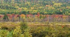 Free Autumn In Acadia Royalty Free Stock Photography - 7707577