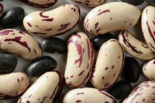 Free Beans Macro At Studio Background Royalty Free Stock Photos - 7708258