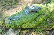 Free Alligator Stock Photos - 7708673