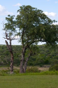 Free Kruger National Park, South Africa Royalty Free Stock Photo - 7709205