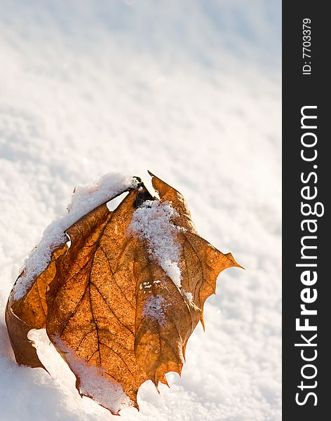 Red leaf and snow