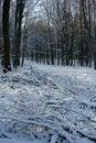Free Winter Stock Image - 7715121