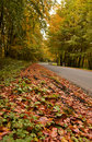 Free Forest Road Royalty Free Stock Photo - 7718095