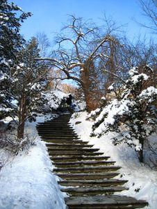 Free Winter Landscape, Park Royalty Free Stock Image - 7710646