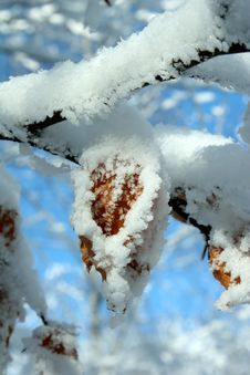 Free Idyllic Snowy Leaf Stock Photos - 7711953