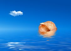Free Shell In Water Stock Photography - 7712132