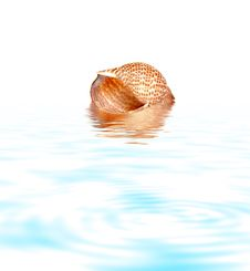 Free Shell In Water Stock Photo - 7712160
