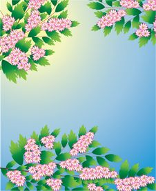 Free Spring Tree Stock Photos - 7712913